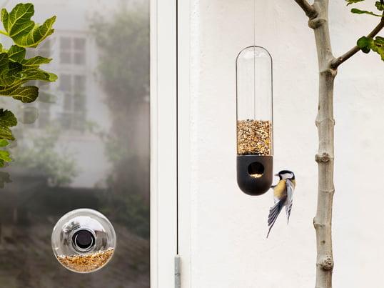 Les mangeoires agissent contre la disparition croissante des oiseaux en offrant un lieu de détente et de ravitaillement.