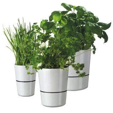 Rosti Mepal - Pot d'herbes Hydro - Groupe