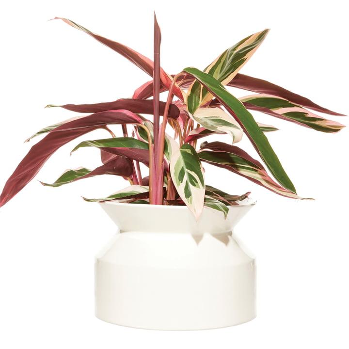 Pot pour plantes en forme d'enrouleur Grand par Boskke en blanc