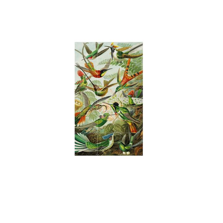 Colibris (Haeckel) 60 x 100 cm de IXXI