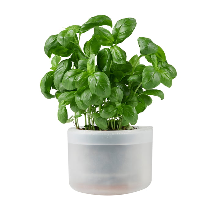 Till Planter Petit, transparent de Boskke