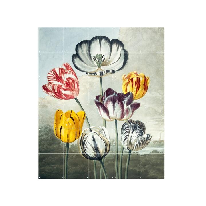 Tulipes murale 100 x 120 cm de IXXI