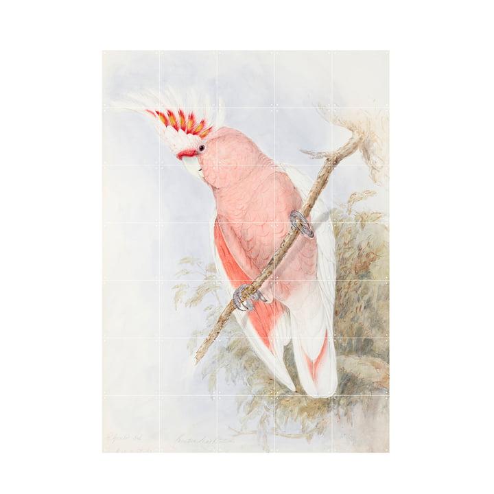 Pink Kakadu Peinture murale de IXXI au format 100 x 140 cm