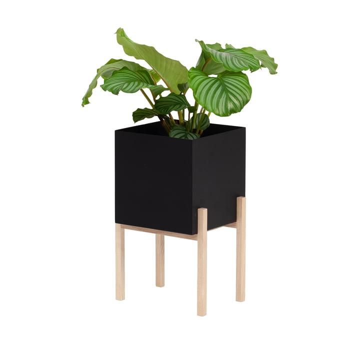 Le site Botanic Pedestal Pot de Design House Stockholm , noir / nature