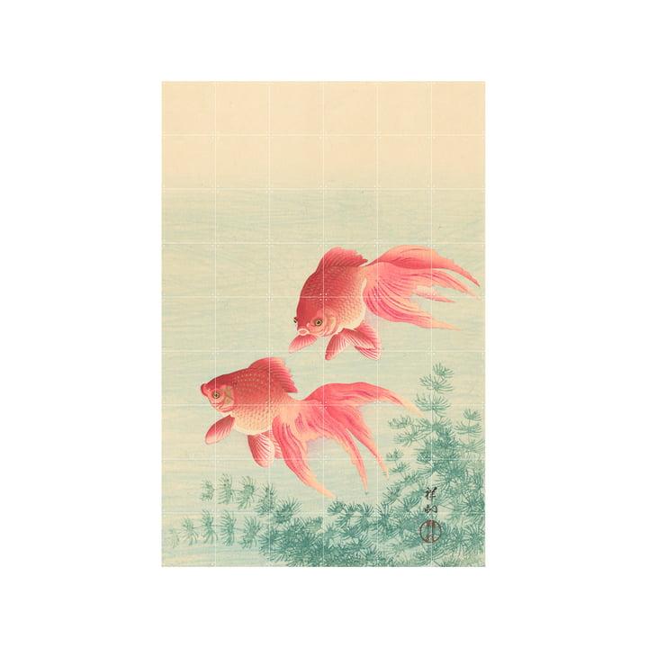 Two Goldfish Murale, 120 x 180 cm de IXXI