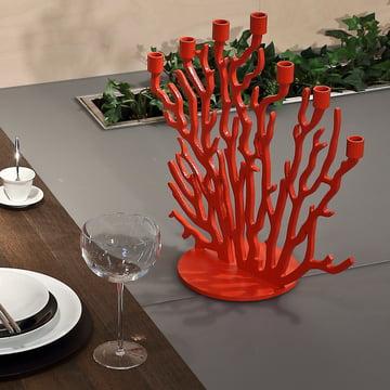 Des branches rouges pour sept bougies
