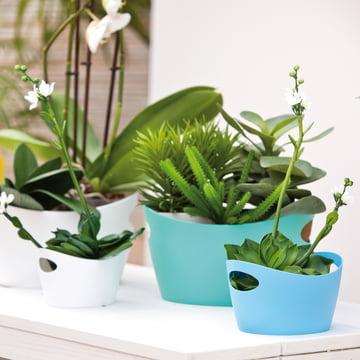 Les baquets Bottichelli comme pots de fleur pratique