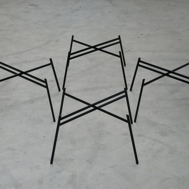 Schindlersalmeron - pied de table, image d'ambiance / de groupe